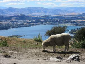I love this walk Roys Peak, Wanaka